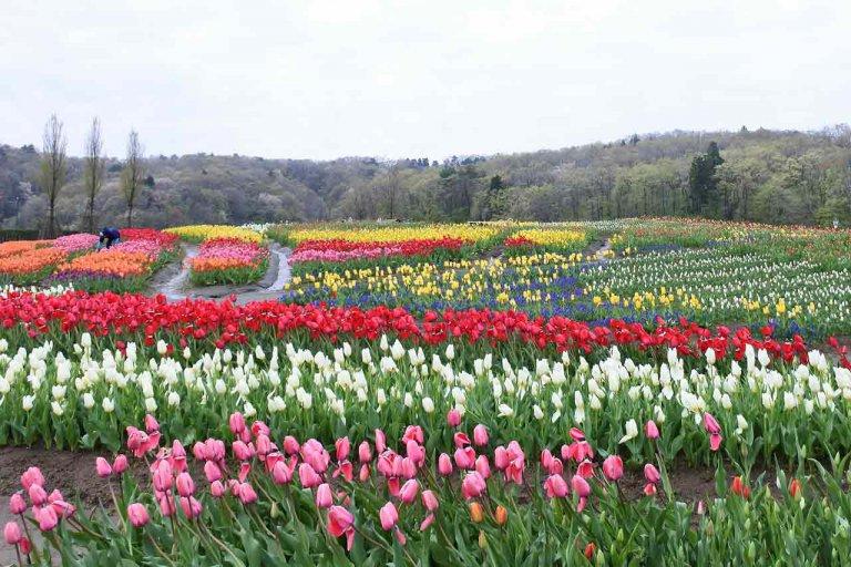 長岡 丘陵 公園