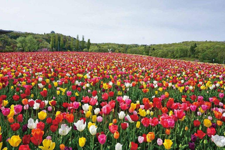 春から初夏の花めぐり。新潟のおすすめ花スポット25選の画像17