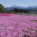 春から初夏の花めぐり。新潟のおすすめ花スポット25選の画像21