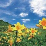 春から初夏の花めぐり。新潟のおすすめ花スポット25選の画像13