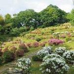 春から初夏の花めぐり。新潟のおすすめ花スポット25選の画像9