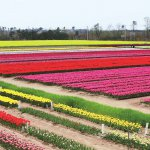 春から初夏の花めぐり。新潟のおすすめ花スポット25選の画像5