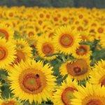 春から初夏の花めぐり。新潟のおすすめ花スポット25選の画像28