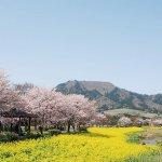 春から初夏の花めぐり。新潟のおすすめ花スポット25選の画像7
