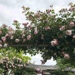 バラが見頃!美しい英国式庭園に癒やされる みつけイングリッシュガーデンの画像4