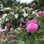 バラが見頃!美しい英国式庭園に癒やされる みつけイングリッシュガーデンのメイン画像