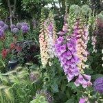 バラが見頃!美しい英国式庭園に癒やされる みつけイングリッシュガーデンの画像7