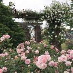 バラが見頃!美しい英国式庭園に癒やされる みつけイングリッシュガーデンの画像6
