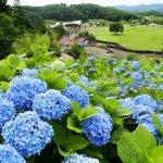 【2021年版】新潟のアジサイ名所6選 田上町ほか 見頃情報もの画像4