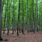 """雨の日にこそオススメしたい! 静けさに包まれる""""ほぼ貸切状態""""の「美人林」で森の香りと新緑に癒されてきました。のメイン画像"""