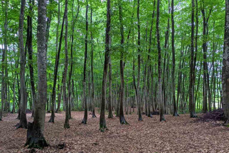 """雨の日にこそオススメしたい! 静けさに包まれる""""ほぼ貸切状態""""の「美人林」で森の香りと新緑に癒されてきました。"""
