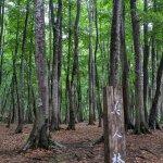 """雨の日にこそオススメしたい! 静けさに包まれる""""ほぼ貸切状態""""の「美人林」で森の香りと新緑に癒されてきました。の画像2"""