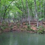 """雨の日にこそオススメしたい! 静けさに包まれる""""ほぼ貸切状態""""の「美人林」で森の香りと新緑に癒されてきました。の画像3"""