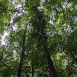 """雨の日にこそオススメしたい! 静けさに包まれる""""ほぼ貸切状態""""の「美人林」で森の香りと新緑に癒されてきました。の画像4"""