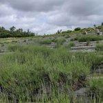 【6/27(日)は入園無料】18000株のアジサイが見頃を迎える「国営越後丘陵公園」でアジサイ・バラ・アサザの花巡りをしてきましたの画像15