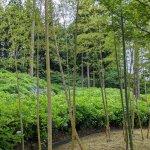 【6/27(日)は入園無料】18000株のアジサイが見頃を迎える「国営越後丘陵公園」でアジサイ・バラ・アサザの花巡りをしてきましたの画像19
