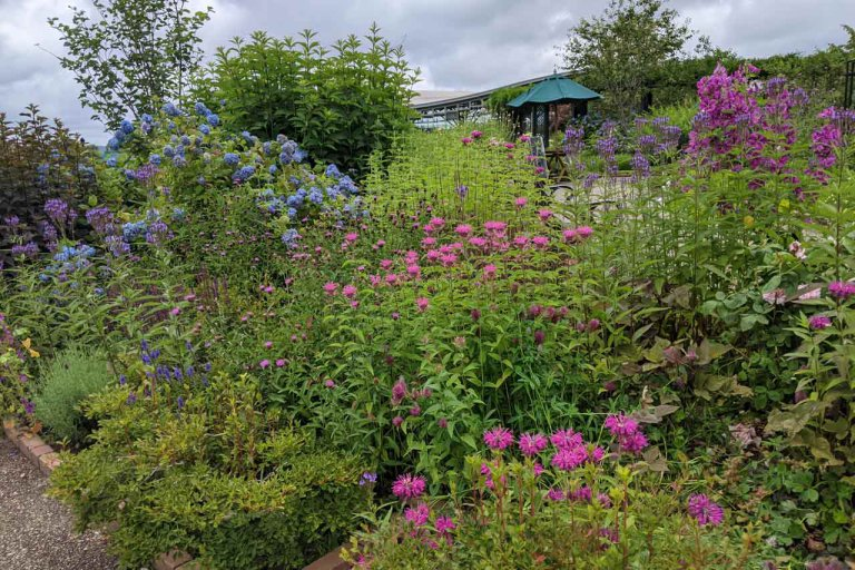 【6/27(日)は入園無料】18000株のアジサイが見頃を迎える「国営越後丘陵公園」でアジサイ・バラ・アサザの花巡りをしてきましたの画像9