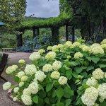 【6/27(日)は入園無料】18000株のアジサイが見頃を迎える「国営越後丘陵公園」でアジサイ・バラ・アサザの花巡りをしてきましたの画像8