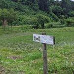 【6/27(日)は入園無料】18000株のアジサイが見頃を迎える「国営越後丘陵公園」でアジサイ・バラ・アサザの花巡りをしてきましたの画像23