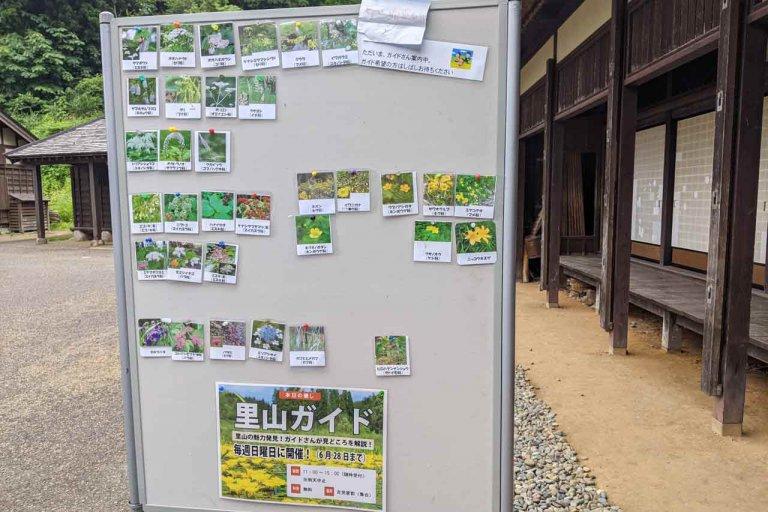 【6/27(日)は入園無料】18000株のアジサイが見頃を迎える「国営越後丘陵公園」でアジサイ・バラ・アサザの花巡りをしてきましたの画像26