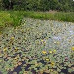 【6/27(日)は入園無料】18000株のアジサイが見頃を迎える「国営越後丘陵公園」でアジサイ・バラ・アサザの花巡りをしてきましたの画像29