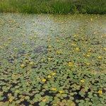 【6/27(日)は入園無料】18000株のアジサイが見頃を迎える「国営越後丘陵公園」でアジサイ・バラ・アサザの花巡りをしてきましたの画像30