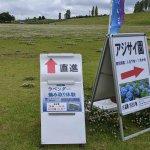 【6/27(日)は入園無料】18000株のアジサイが見頃を迎える「国営越後丘陵公園」でアジサイ・バラ・アサザの花巡りをしてきましたの画像12