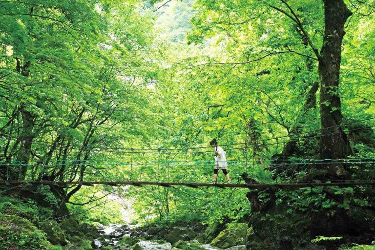 夏におすすめ!新潟の避暑地・ひんやりお出かけスポット14選 自然豊かな名所&穴場