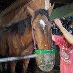 注目を集める「引退馬の養老牧場」。胎内市「松原ステーブルス」の無料牧場見学でかわいい馬たちに癒されてきました。のメイン画像