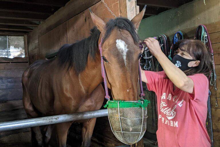 注目を集める「引退馬の養老牧場」。胎内市「松原ステーブルス」の無料牧場見学でかわいい馬たちに癒されてきました。