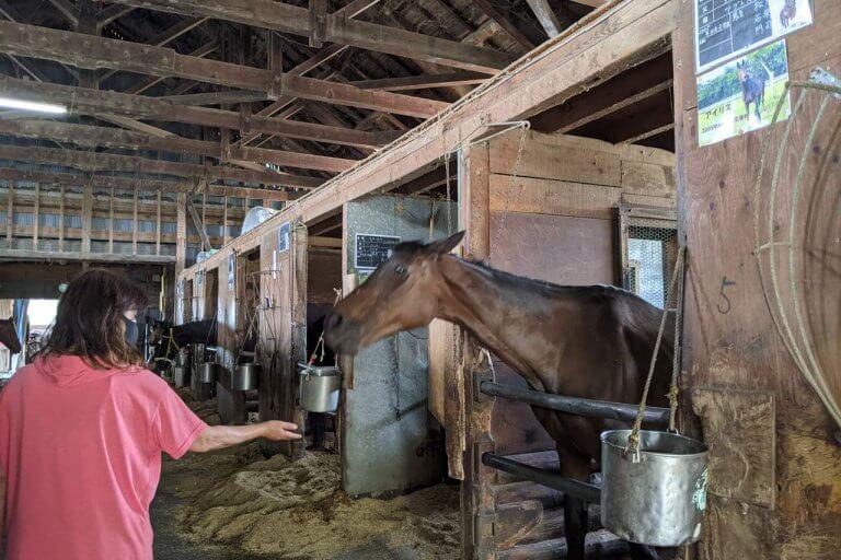 注目を集める「引退馬の養老牧場」。胎内市「松原ステーブルス」の無料牧場見学でかわいい馬たちに癒されてきました。の画像6
