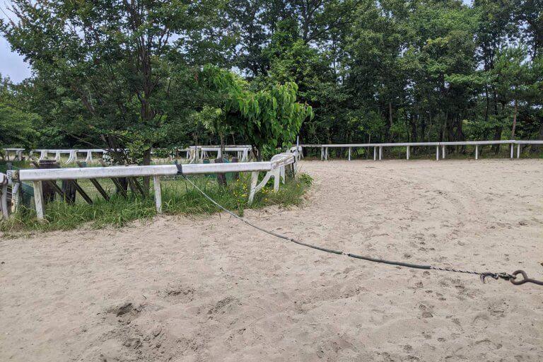 注目を集める「引退馬の養老牧場」。胎内市「松原ステーブルス」の無料牧場見学でかわいい馬たちに癒されてきました。の画像8
